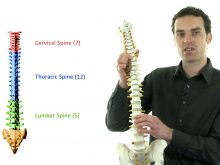 OFI Trainer with a model of a spine